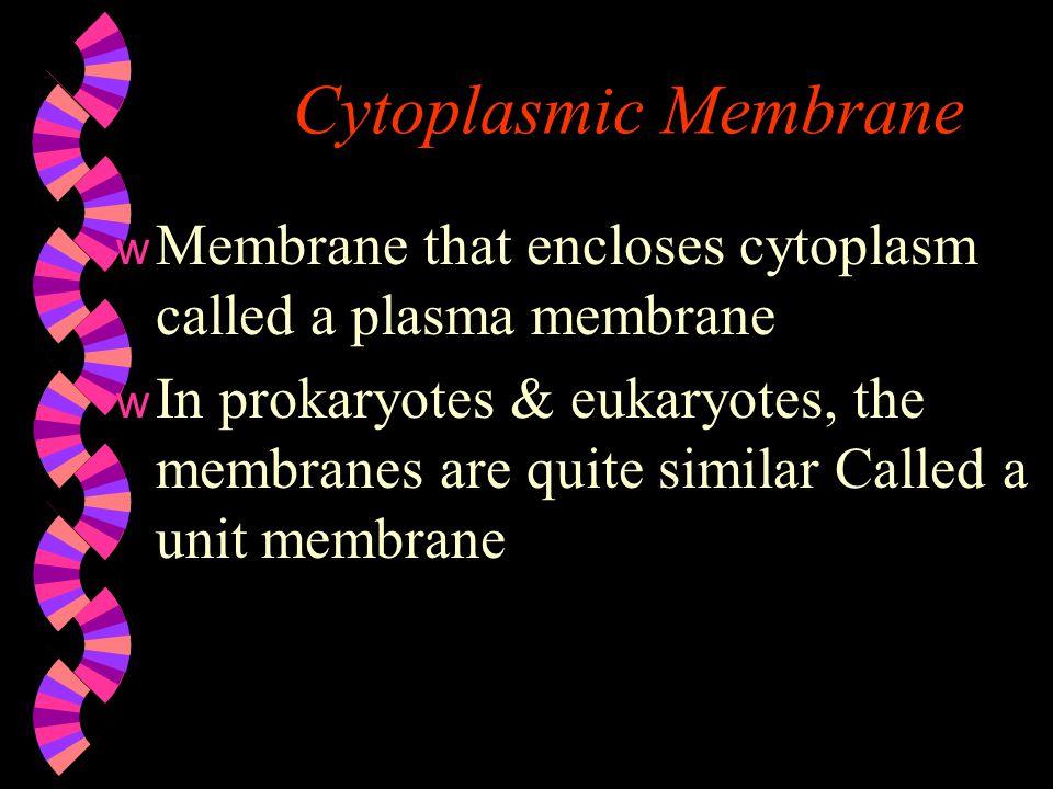 Cytoplasmic Membrane Membrane that encloses cytoplasm called a plasma membrane.