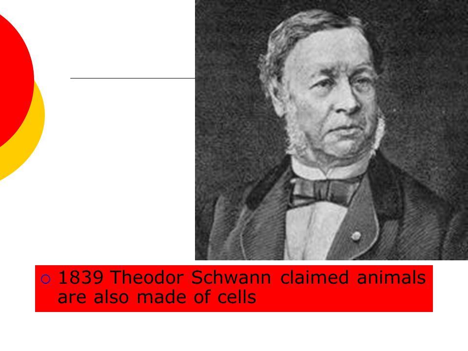 1839 Theodor Schwann claimed animals are also made of cells
