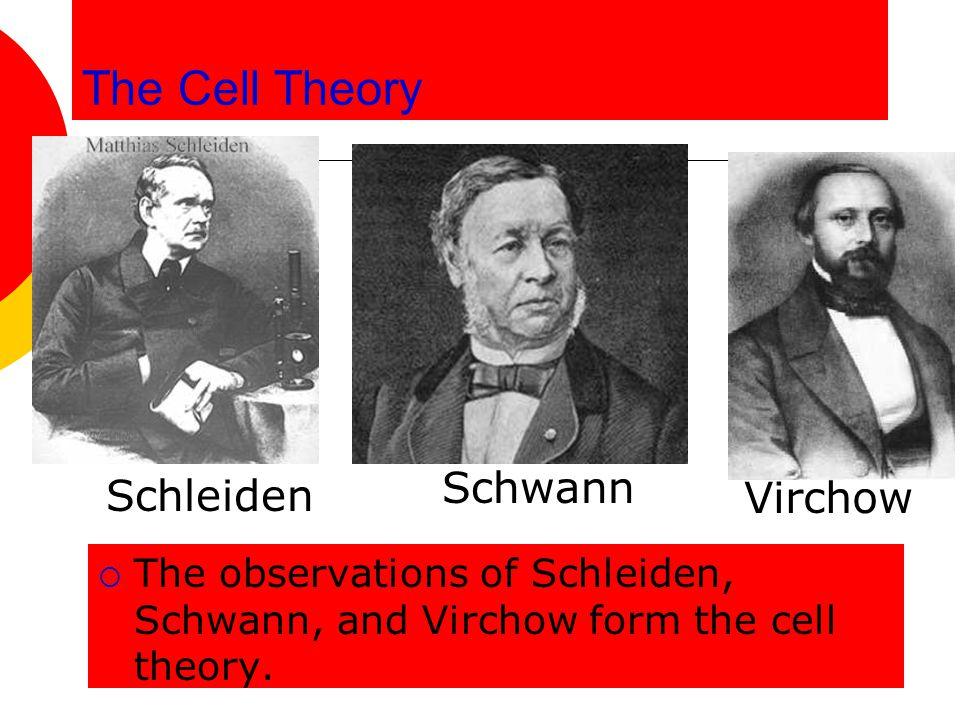 The Cell Theory Schwann Schleiden Virchow