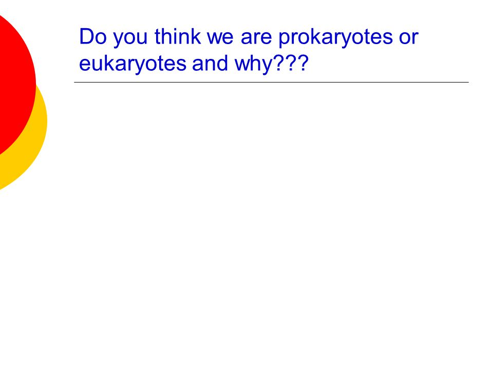 Do you think we are prokaryotes or eukaryotes and why