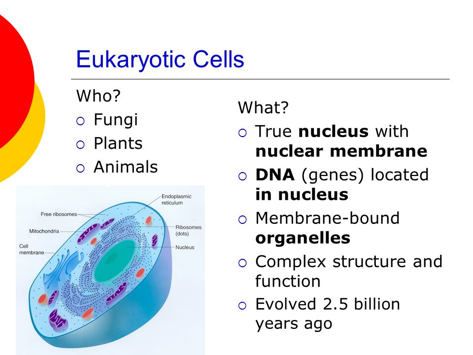 Eukaryotic Cells Who Fungi What Plants