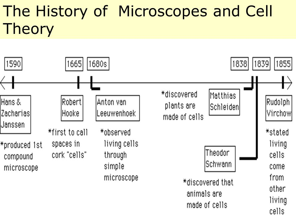 The History of Microscopes and Cell Theory