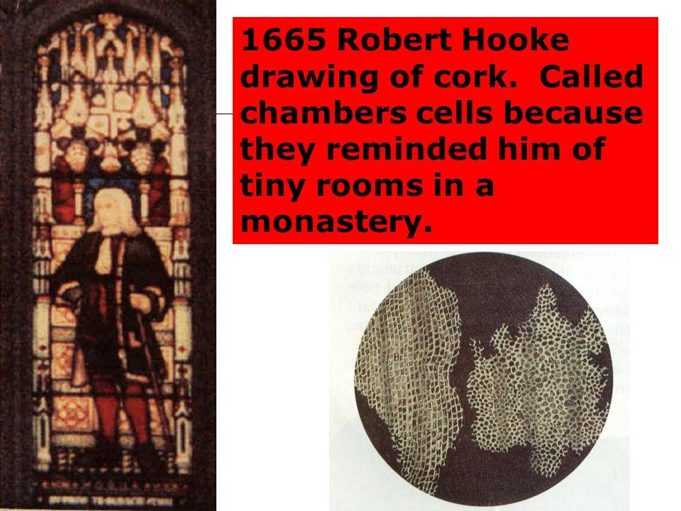 1665 Robert Hooke drawing of cork