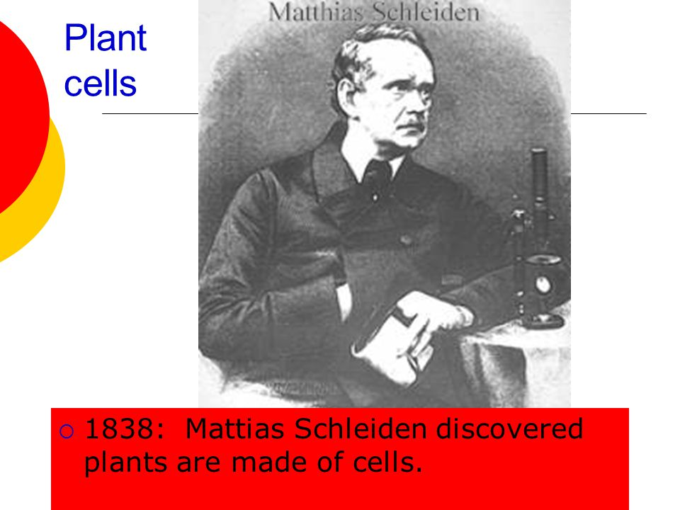 Plant cells 1838: Mattias Schleiden discovered plants are made of cells.