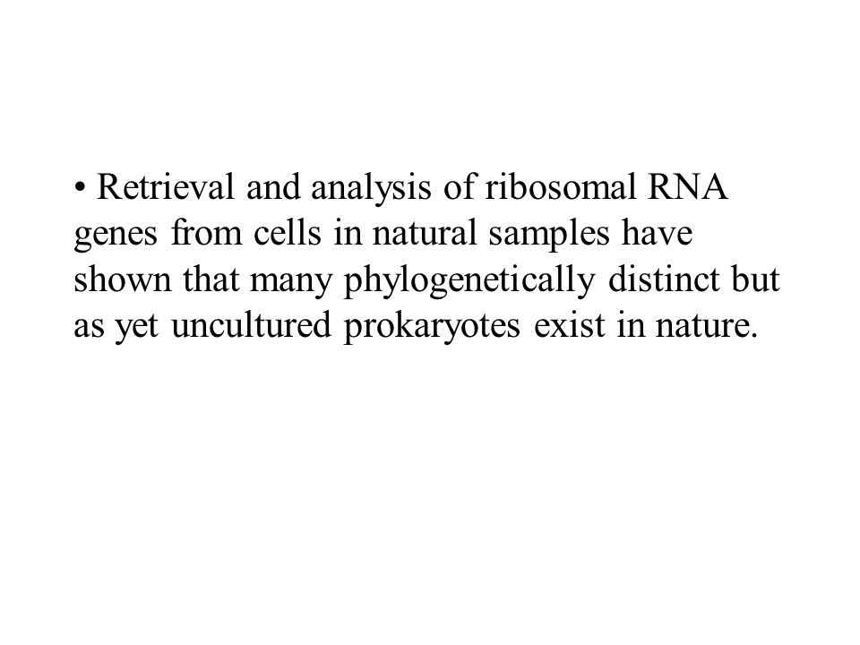 Retrieval and analysis of ribosomal RNA genes from cells in natural samples have shown that many phylogenetically distinct but as yet uncultured prokaryotes exist in nature.