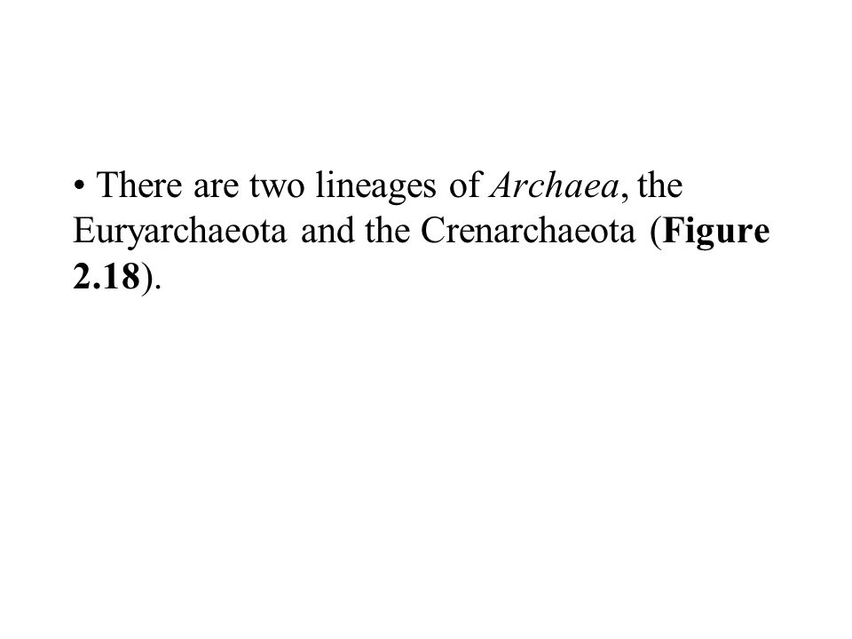 There are two lineages of Archaea, the Euryarchaeota and the Crenarchaeota (Figure 2.18).