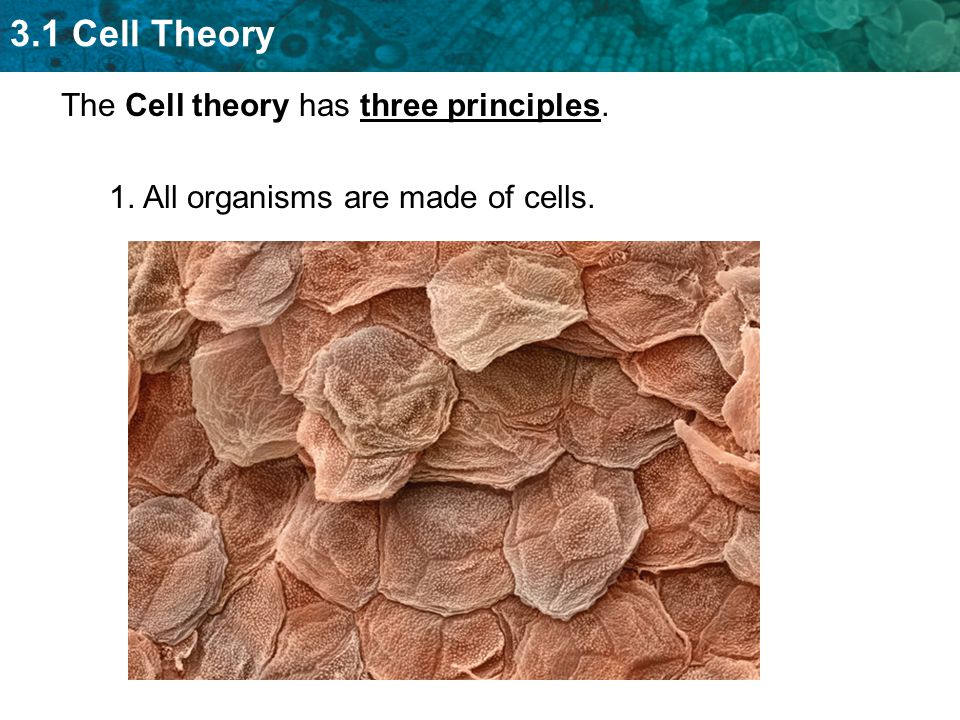 The Cell theory has three principles.