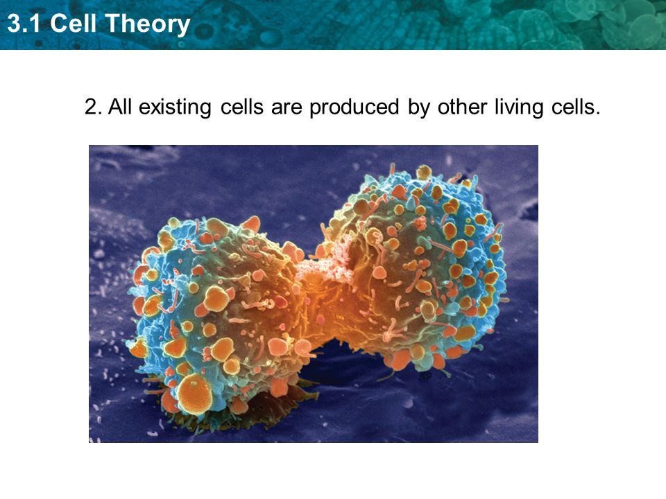 2. All existing cells are produced by other living cells.