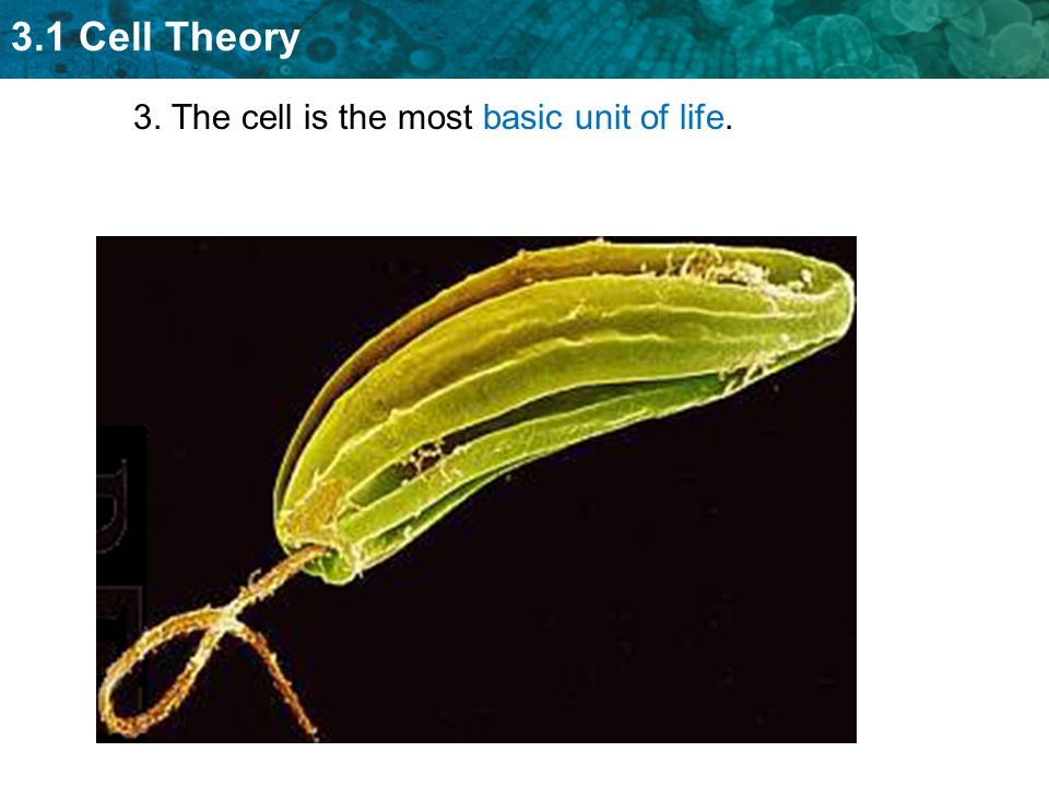 3. The cell is the most basic unit of life.