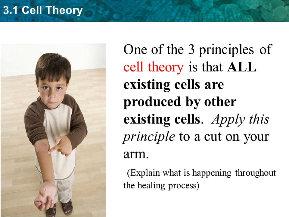 One of the 3 principles of cell theory is that ALL existing cells are produced by other existing cells. Apply this principle to a cut on your arm.