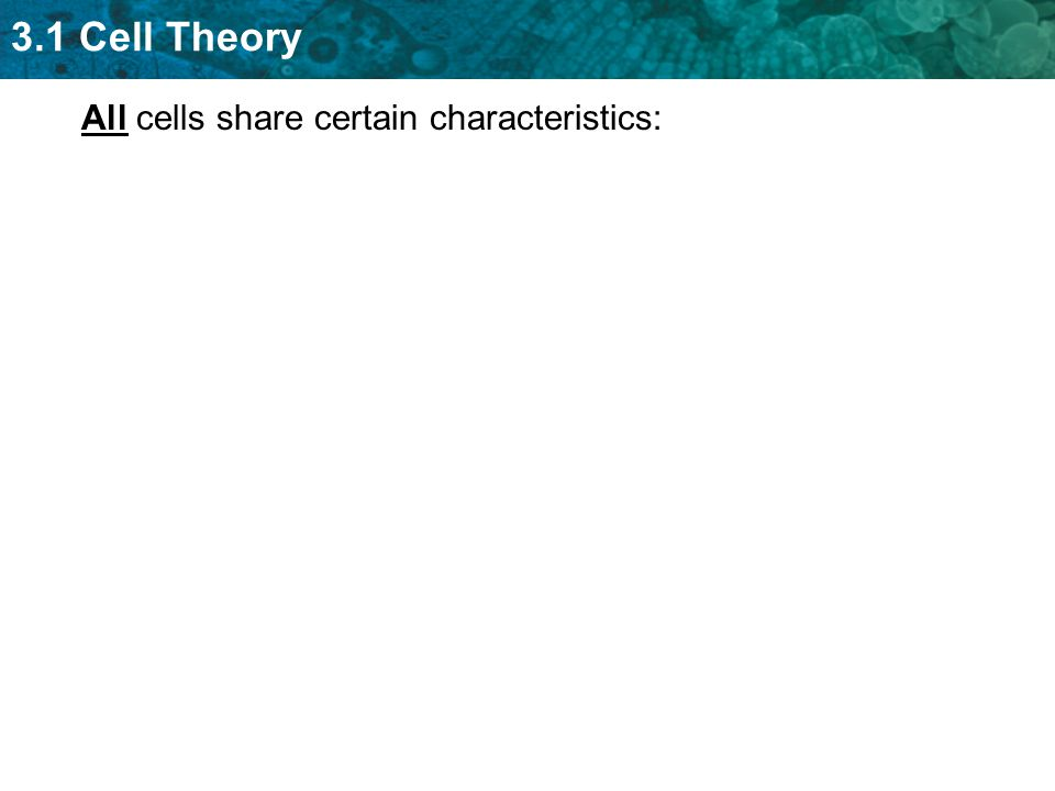 All cells share certain characteristics: