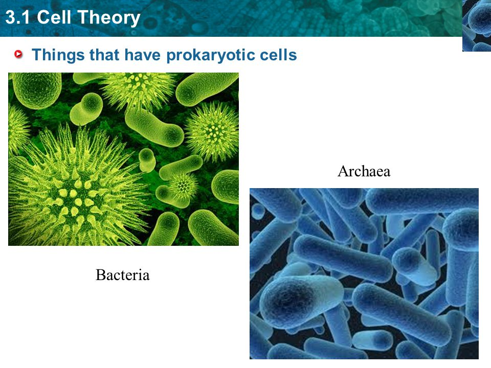 Things that have prokaryotic cells
