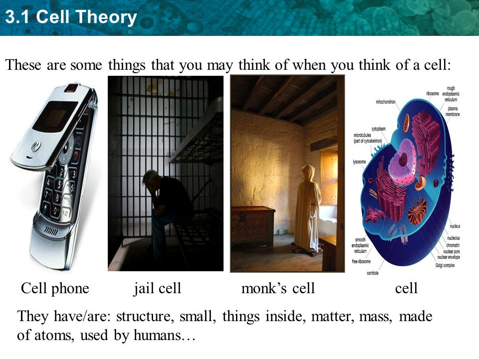 These are some things that you may think of when you think of a cell: