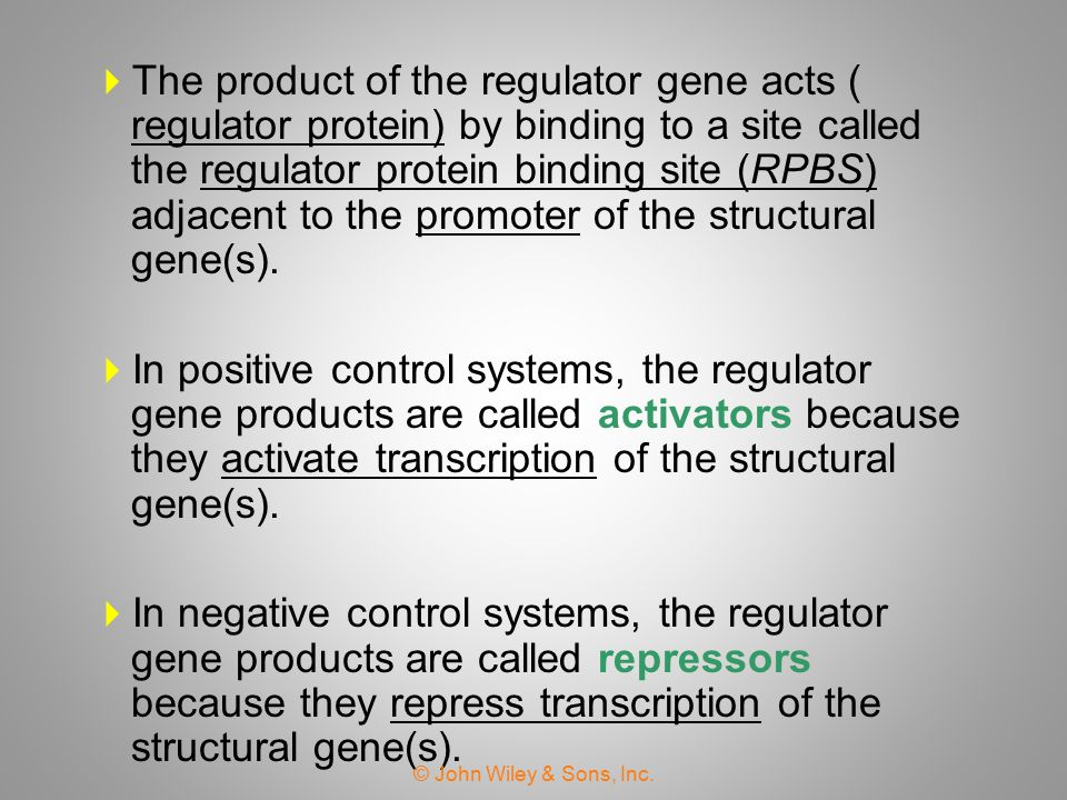 The product of the regulator gene acts ( regulator protein) by binding to a site called the regulator protein binding site (RPBS) adjacent to the promoter of the structural gene(s).