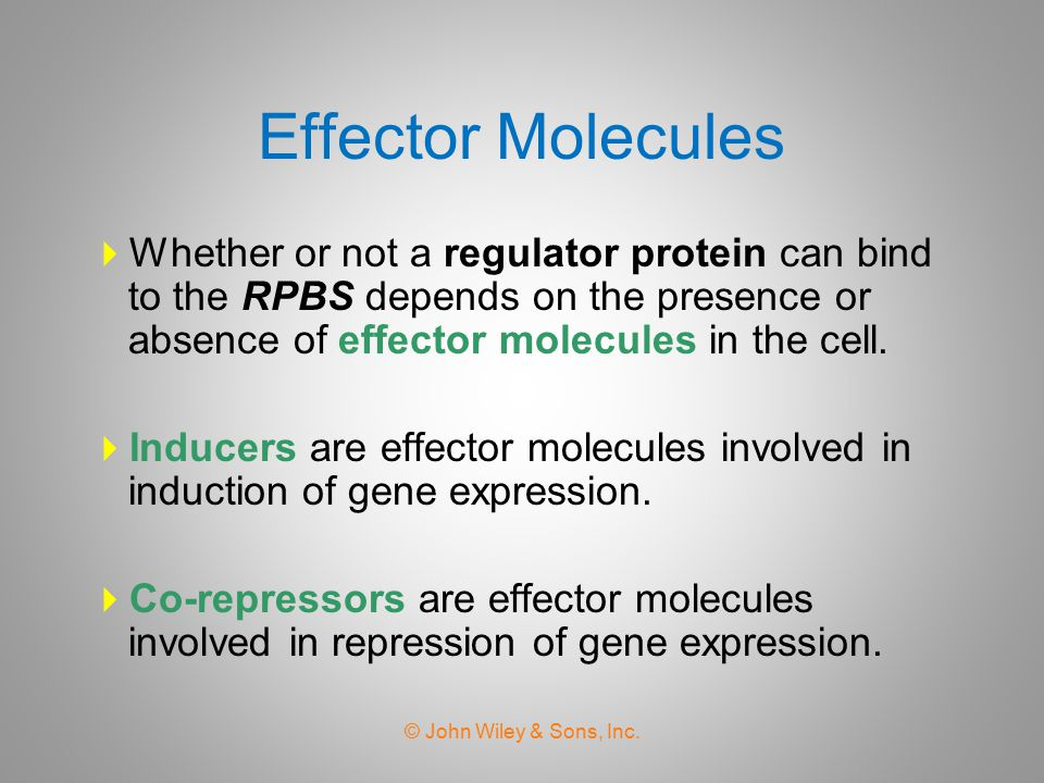 Effector Molecules Whether or not a regulator protein can bind to the RPBS depends on the presence or absence of effector molecules in the cell.