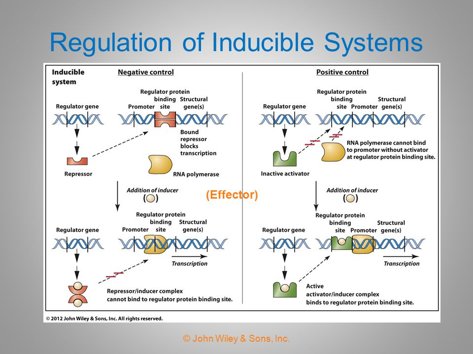 Regulation of Inducible Systems