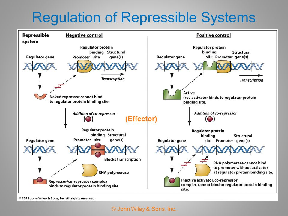 Regulation of Repressible Systems