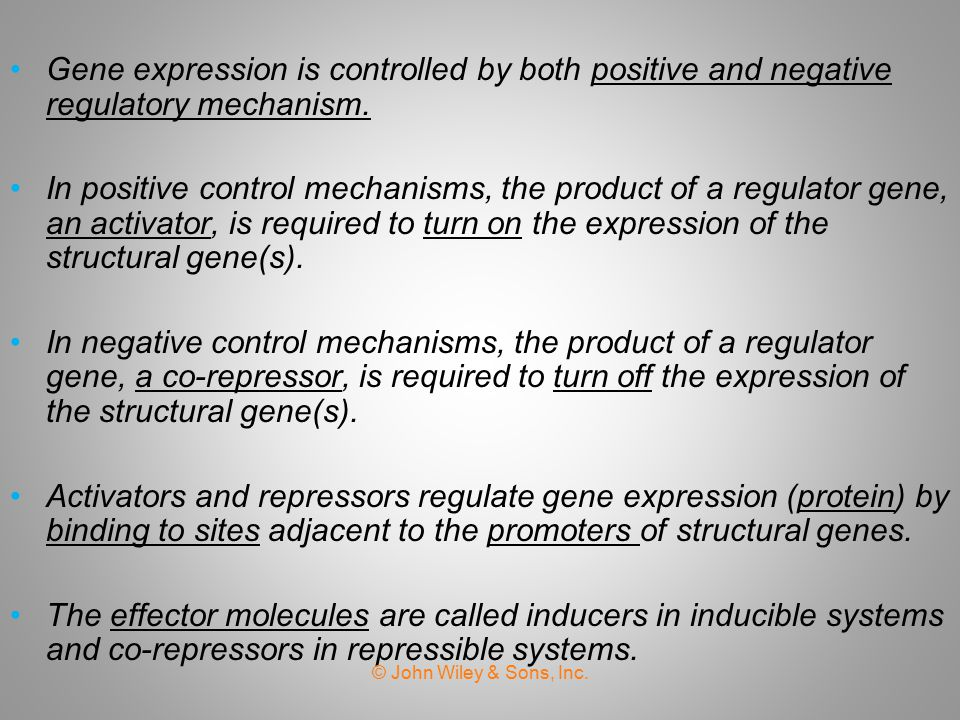 Gene expression is controlled by both positive and negative regulatory mechanism.