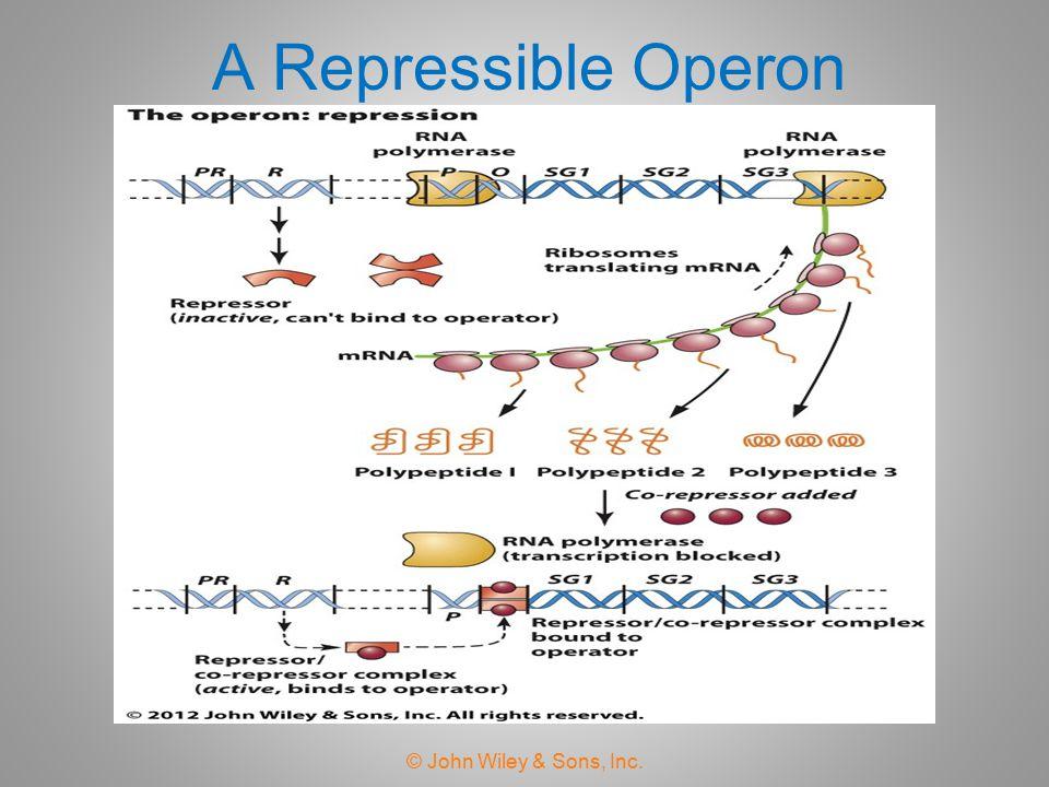 A Repressible Operon © John Wiley & Sons, Inc.