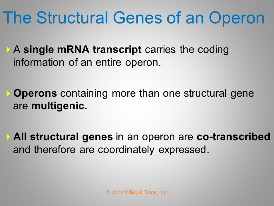 The Structural Genes of an Operon
