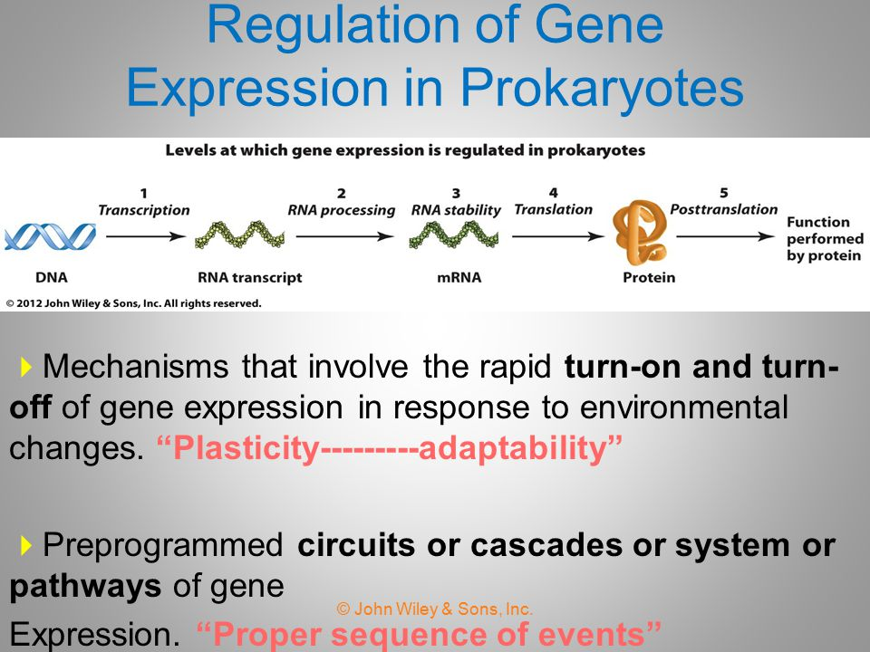 Chapter 18 Regulation of Gene Expression in Prokaryotes ppt – Gene Expression Worksheet