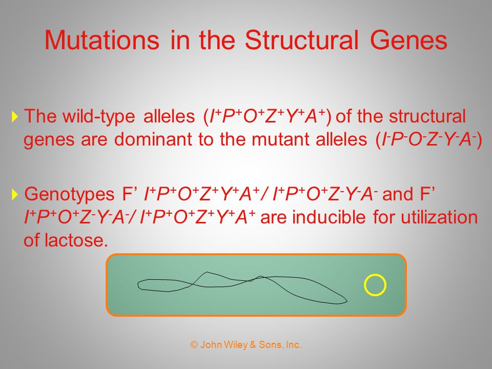 Mutations in the Structural Genes