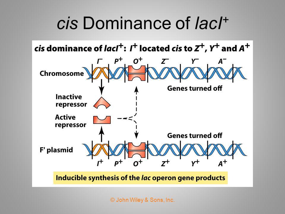 cis Dominance of lacI+ © John Wiley & Sons, Inc.