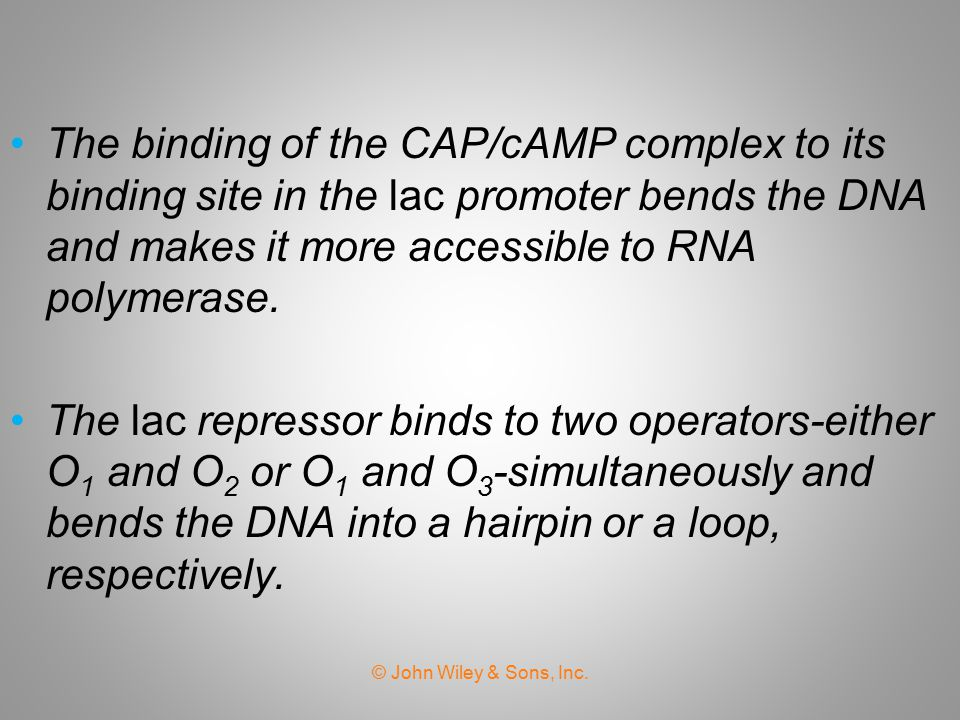 The binding of the CAP/cAMP complex to its binding site in the lac promoter bends the DNA and makes it more accessible to RNA polymerase.