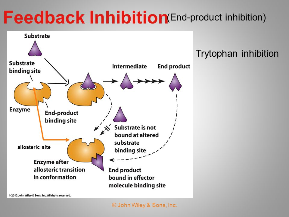 Feedback Inhibition (End-product inhibition) Trytophan inhibition