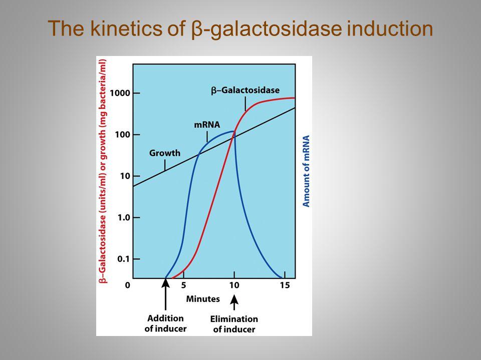 The kinetics of β-galactosidase induction