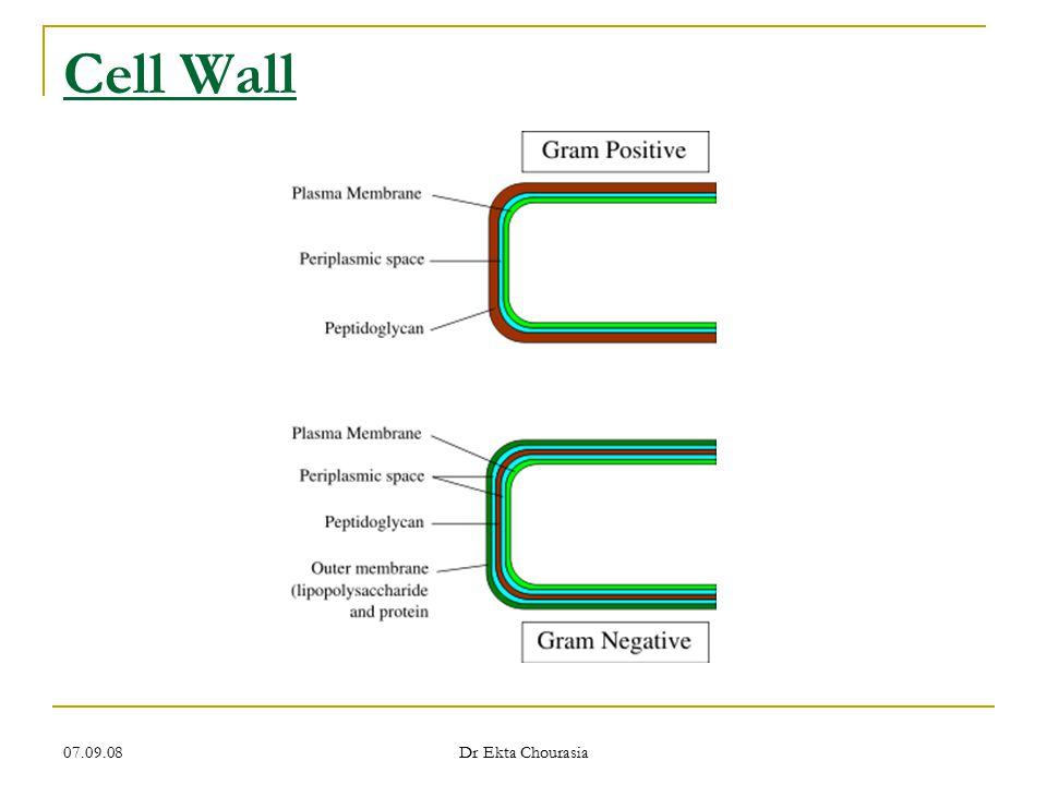 Cell Wall 07.09.08 Dr Ekta Chourasia