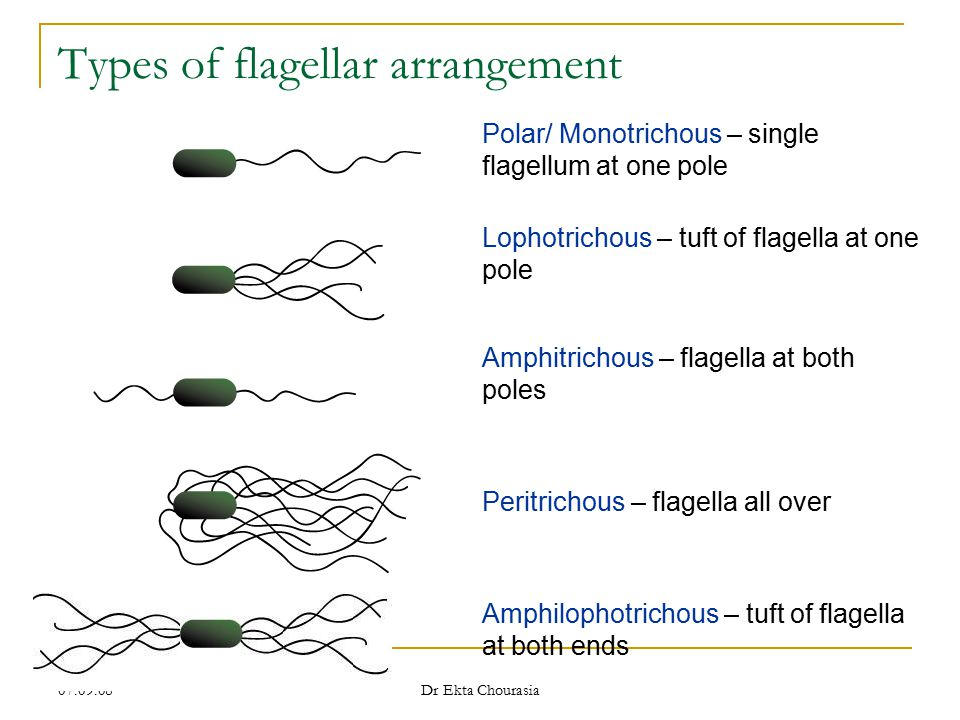 Types of flagellar arrangement