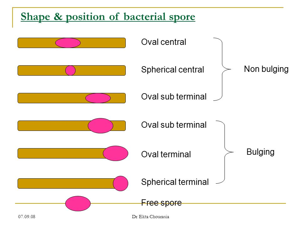 Shape & position of bacterial spore