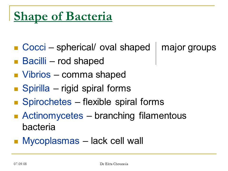 Shape of Bacteria Cocci – spherical/ oval shaped major groups