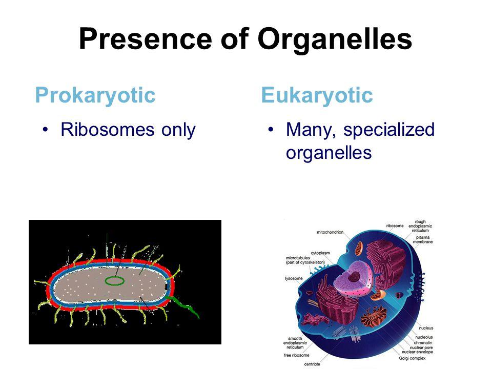 Presence of Organelles