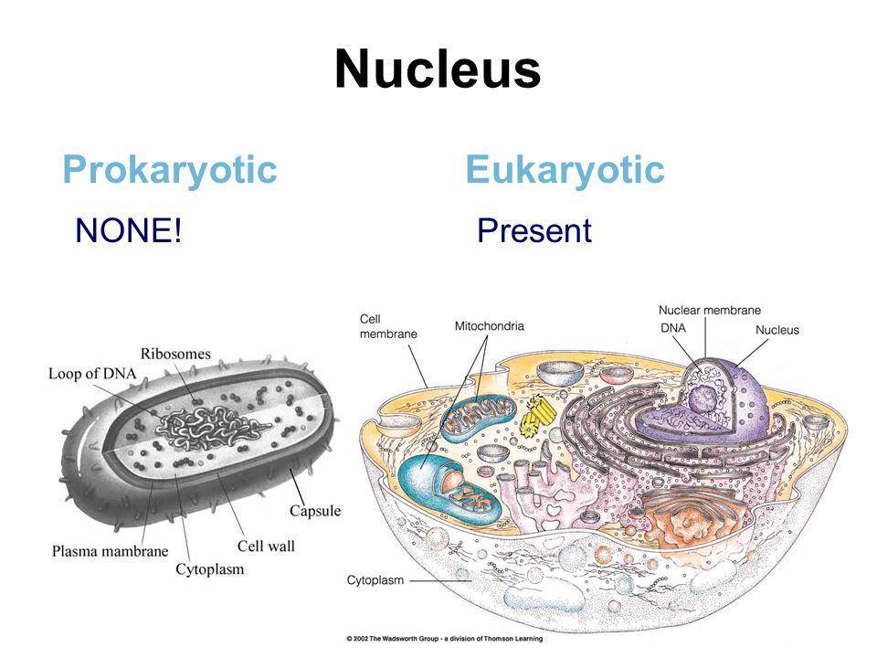 Nucleus Prokaryotic Eukaryotic NONE! Present