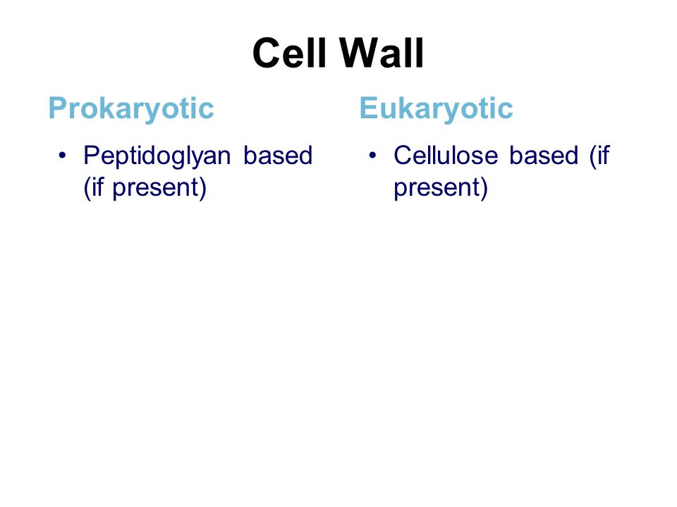 Cell Wall Prokaryotic Eukaryotic Peptidoglyan based (if present)