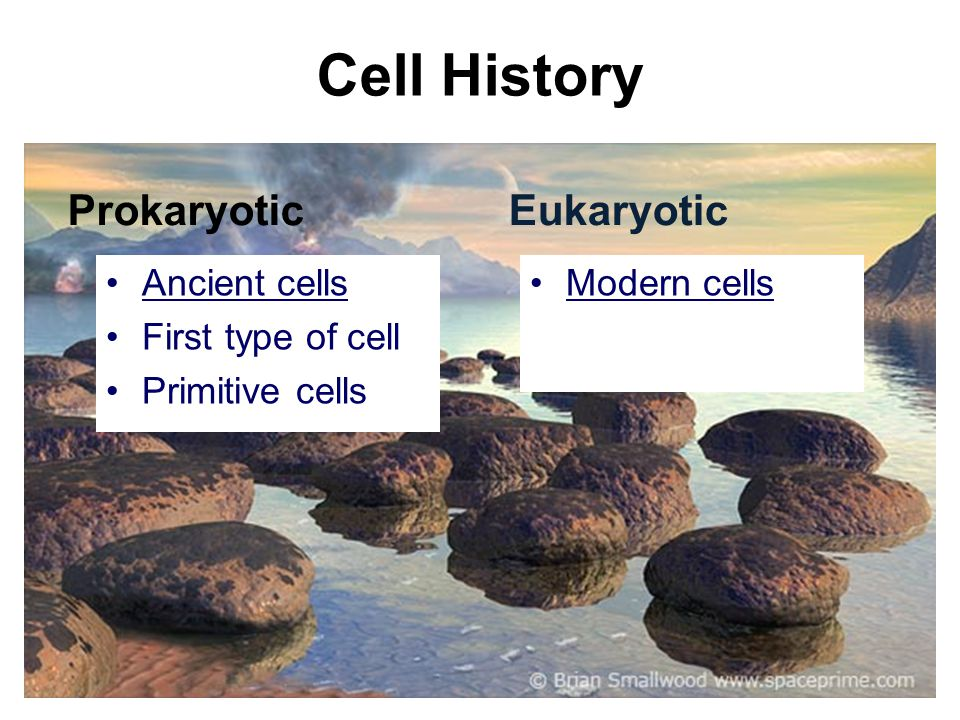 Cell History Prokaryotic Eukaryotic Ancient cells First type of cell