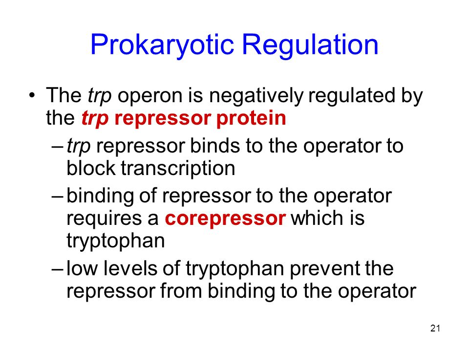 Prokaryotic Regulation