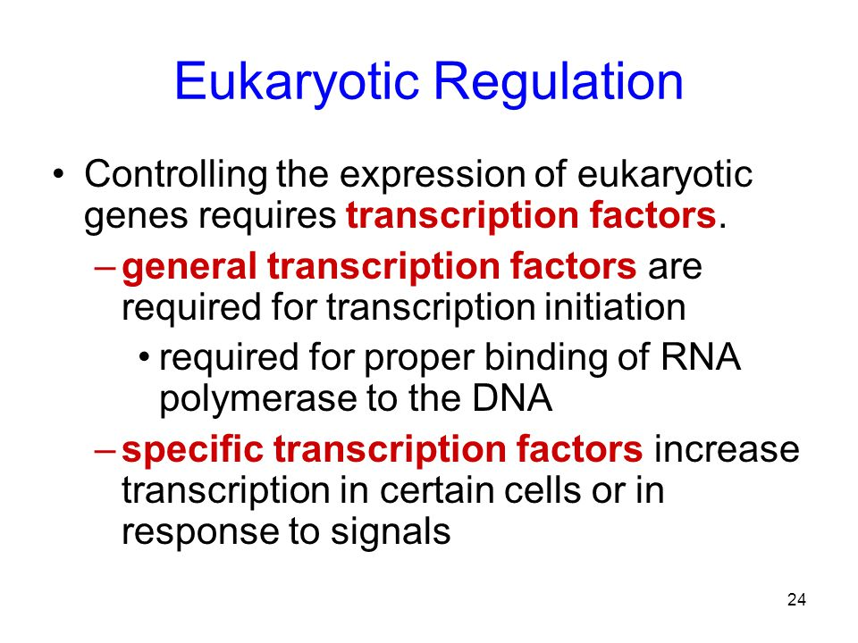 Eukaryotic Regulation