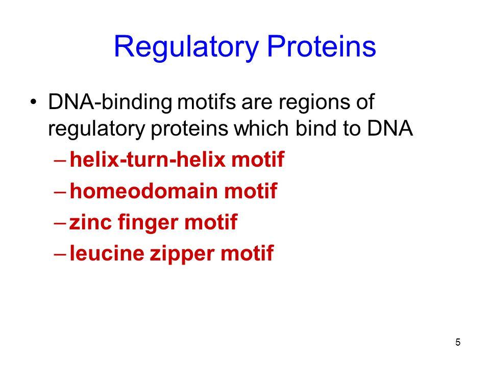 Regulatory Proteins DNA-binding motifs are regions of regulatory proteins which bind to DNA. helix-turn-helix motif.