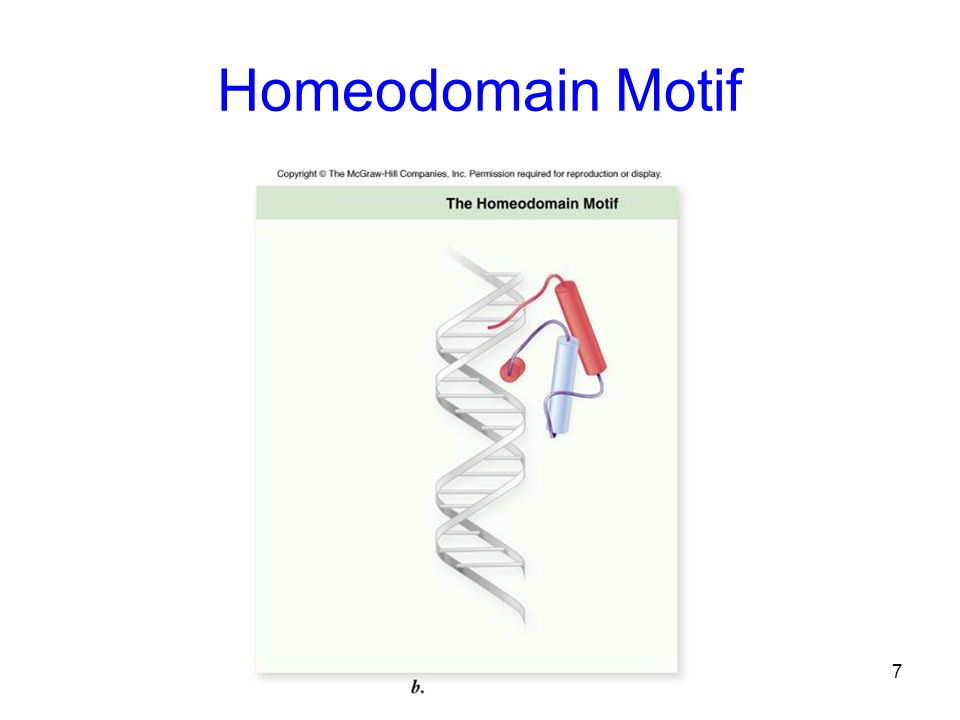 Homeodomain Motif