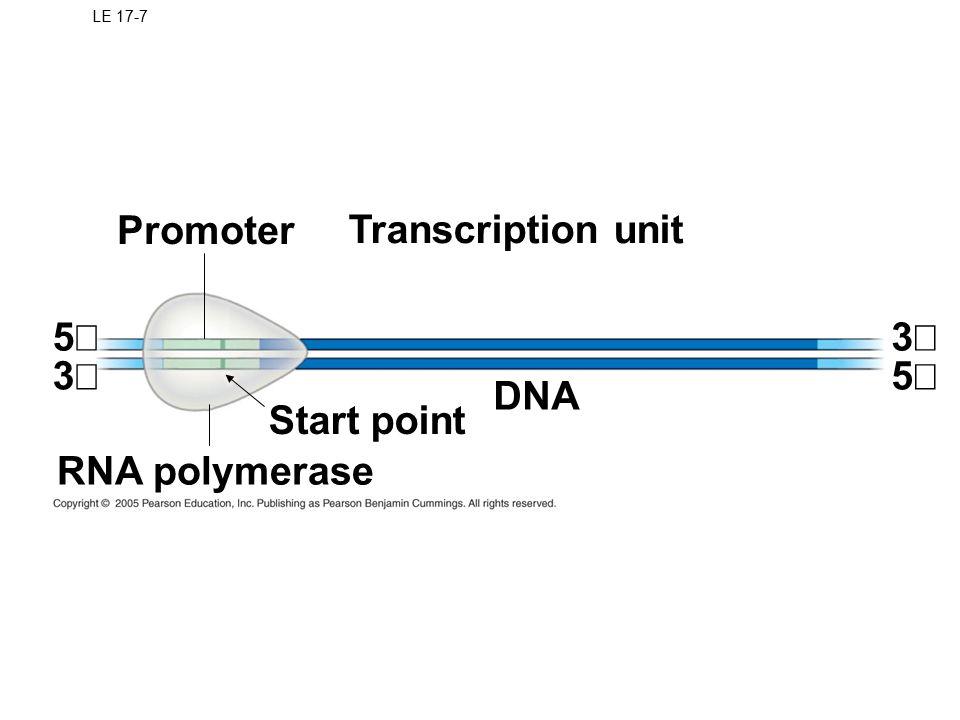 Promoter Transcription unit 5¢ 3¢ 3¢ 5¢ DNA Start point RNA polymerase