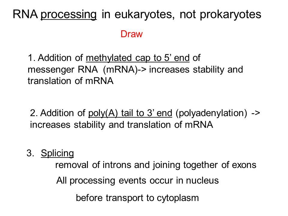 RNA processing in eukaryotes, not prokaryotes