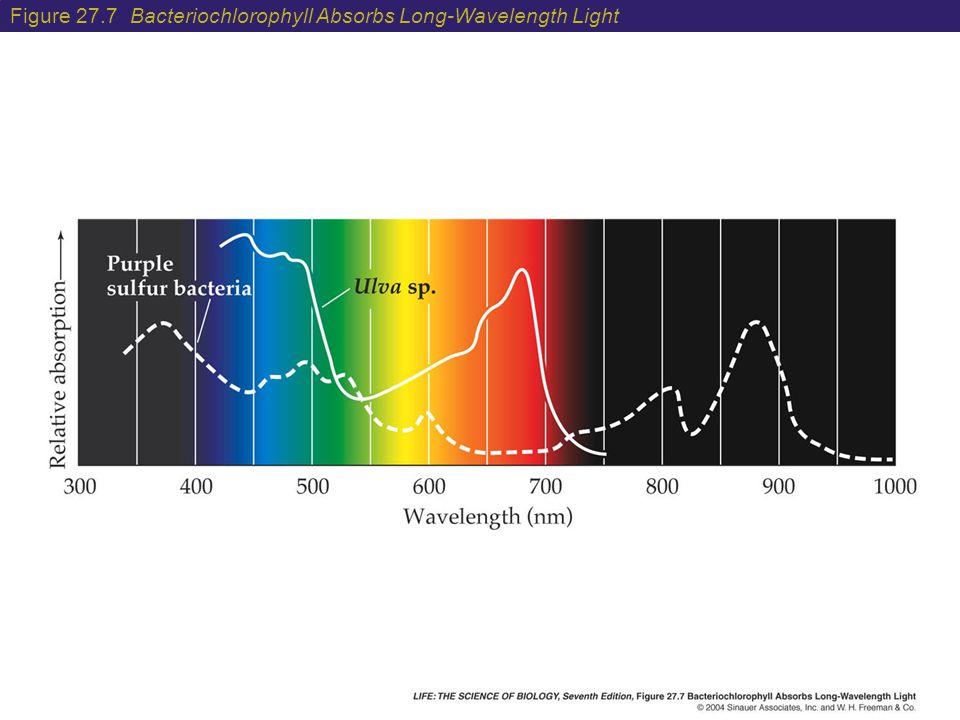 Figure 27.7 Bacteriochlorophyll Absorbs Long-Wavelength Light