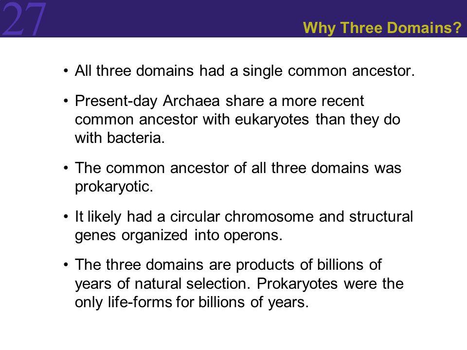 Why Three Domains All three domains had a single common ancestor.