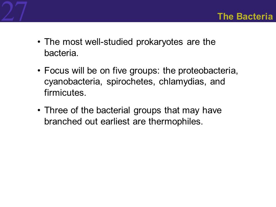 The Bacteria The most well-studied prokaryotes are the bacteria.