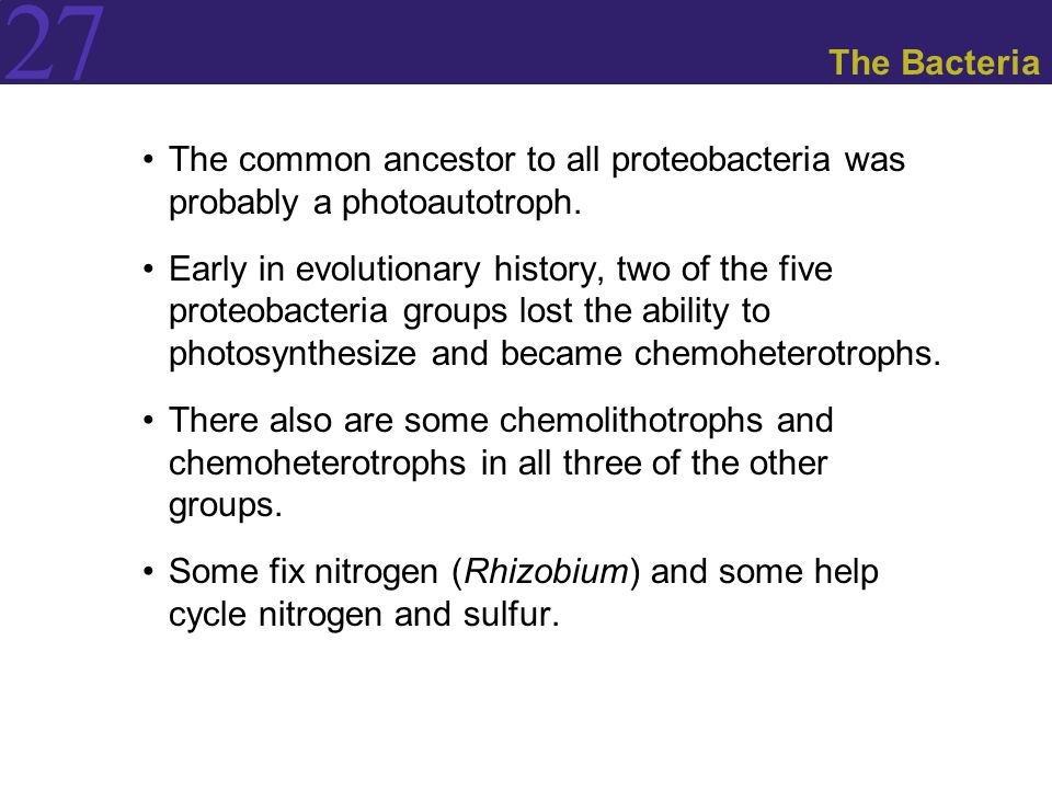 The Bacteria The common ancestor to all proteobacteria was probably a photoautotroph.