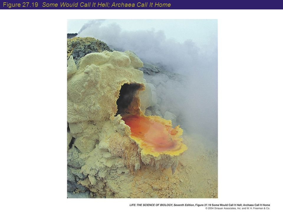 Figure 27.19 Some Would Call It Hell; Archaea Call It Home