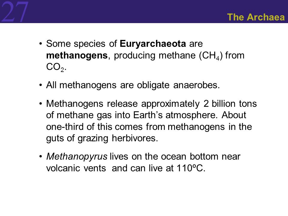 The Archaea Some species of Euryarchaeota are methanogens, producing methane (CH4) from CO2. All methanogens are obligate anaerobes.
